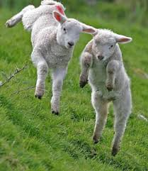 Like a lamb...leaping for joy!