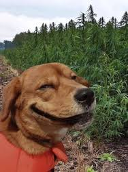 Ever seen a grinning dog?