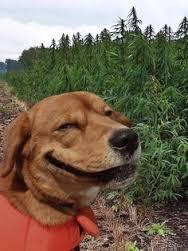 Ever seen a grinning dog?